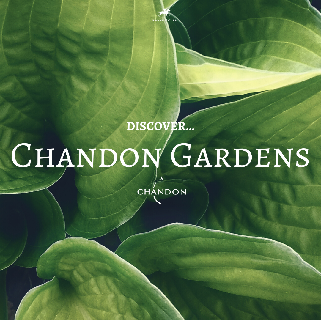Copy of Chandon Gardens Billboard FINAL.png