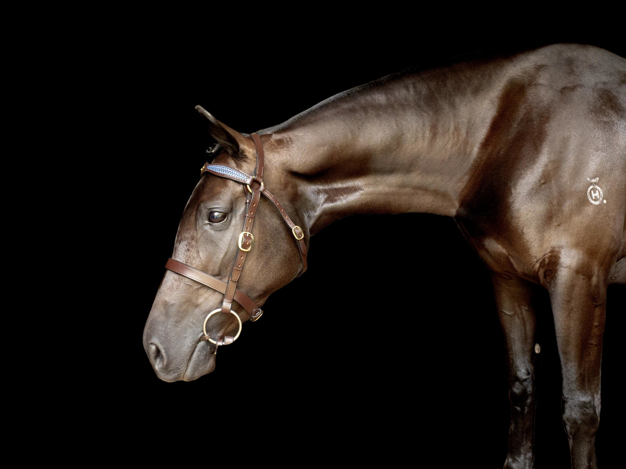 fine-art-equine-horse-black-background.jpg