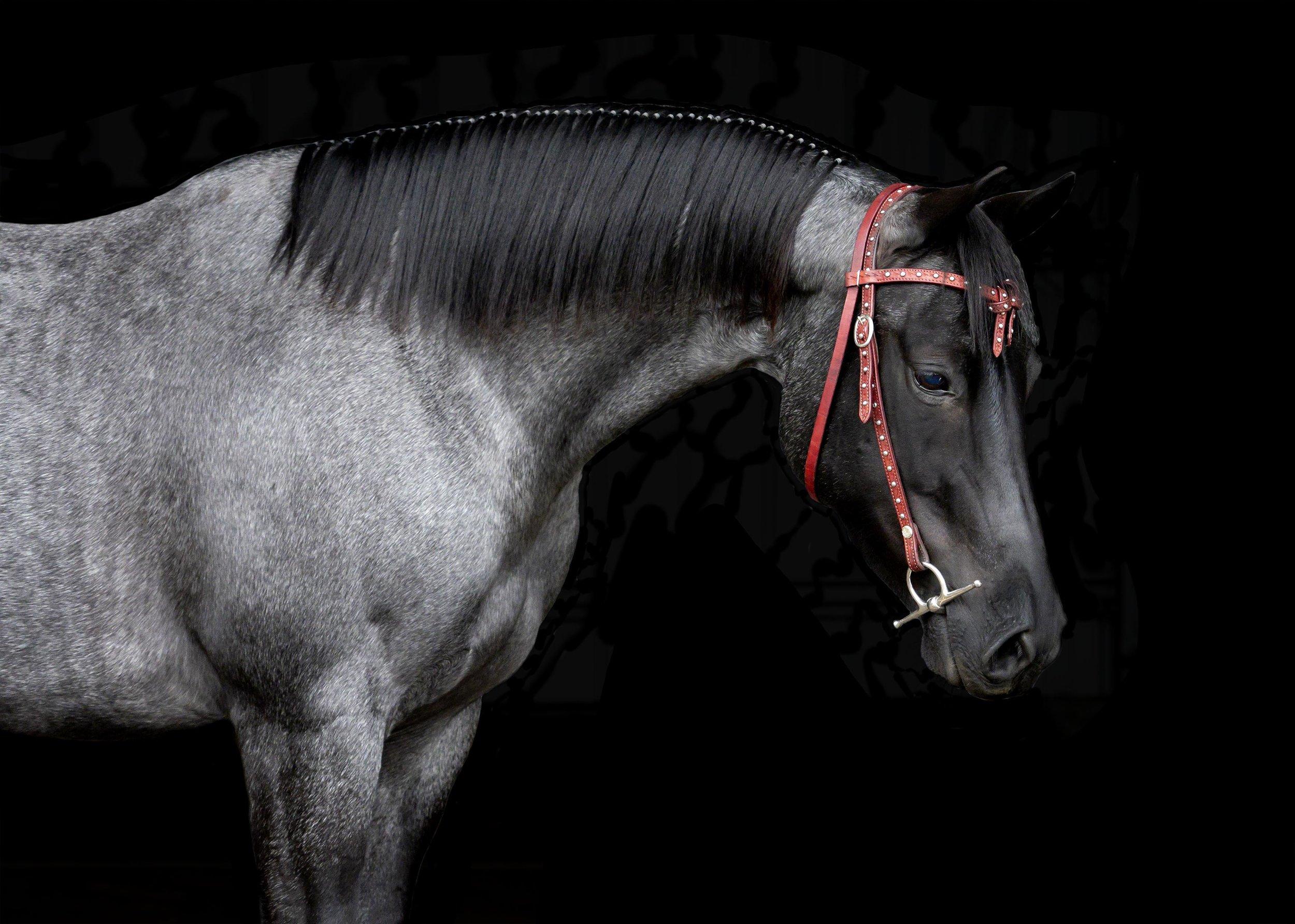fine-art-portrait-equine.jpg