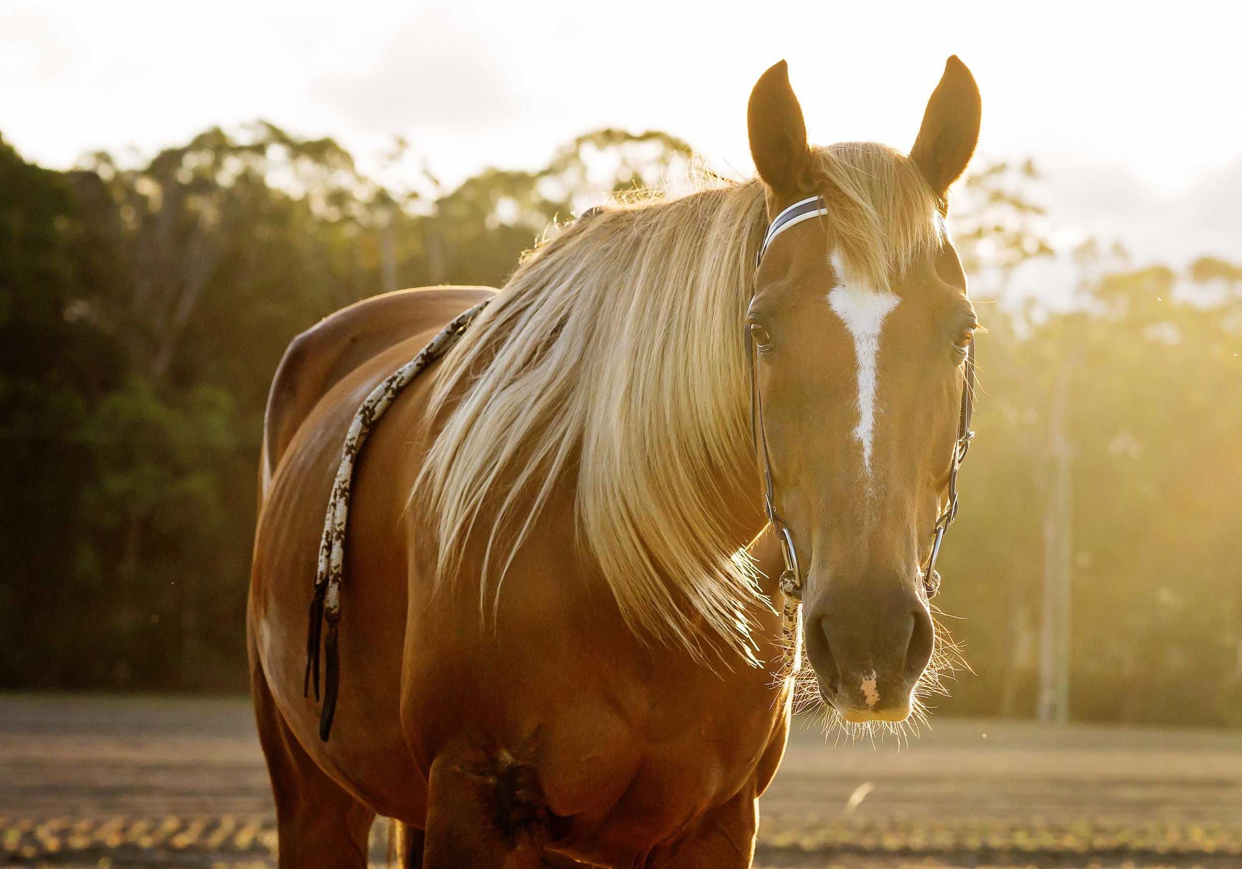 horse-natural-light-portraits.jpg