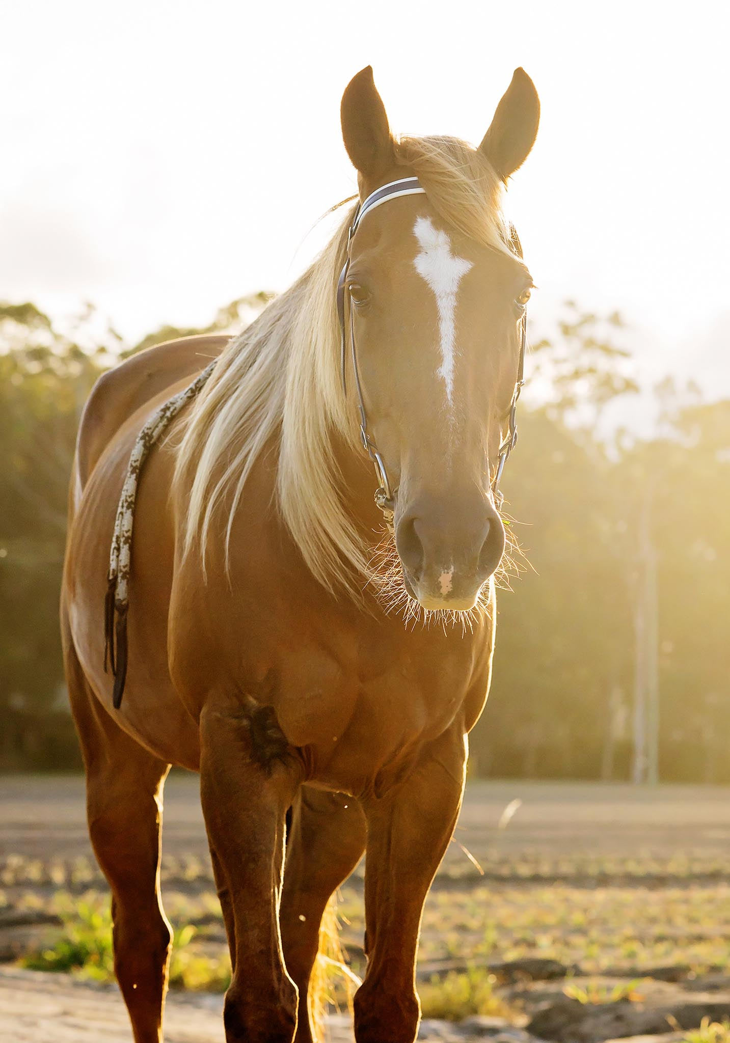 horse-portrait-natural-light.jpg