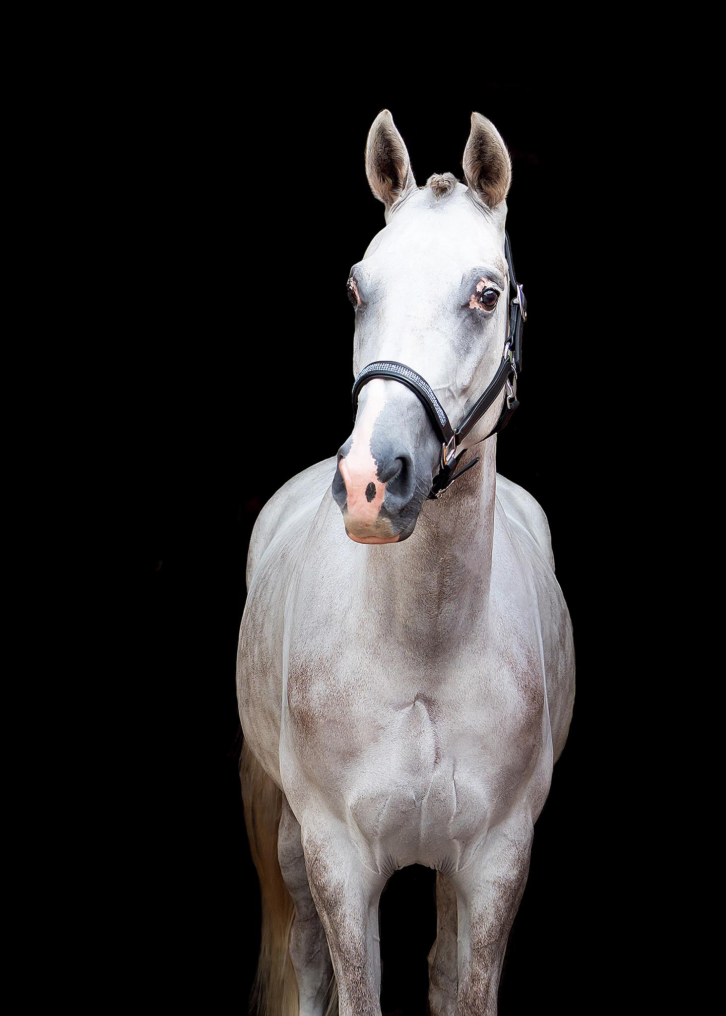 Equine-black-background-portrait.jpg