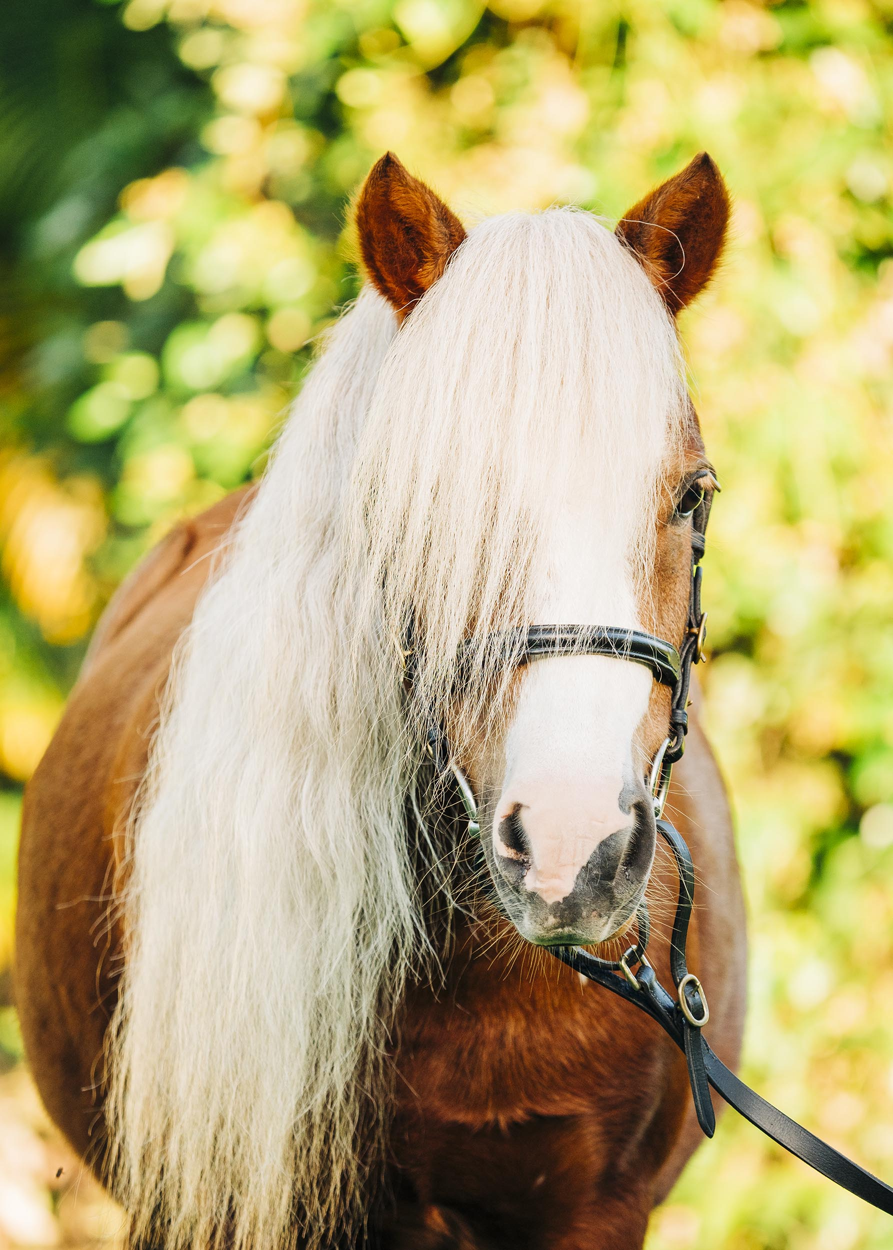 horse-pony-photography-brisbane.jpg