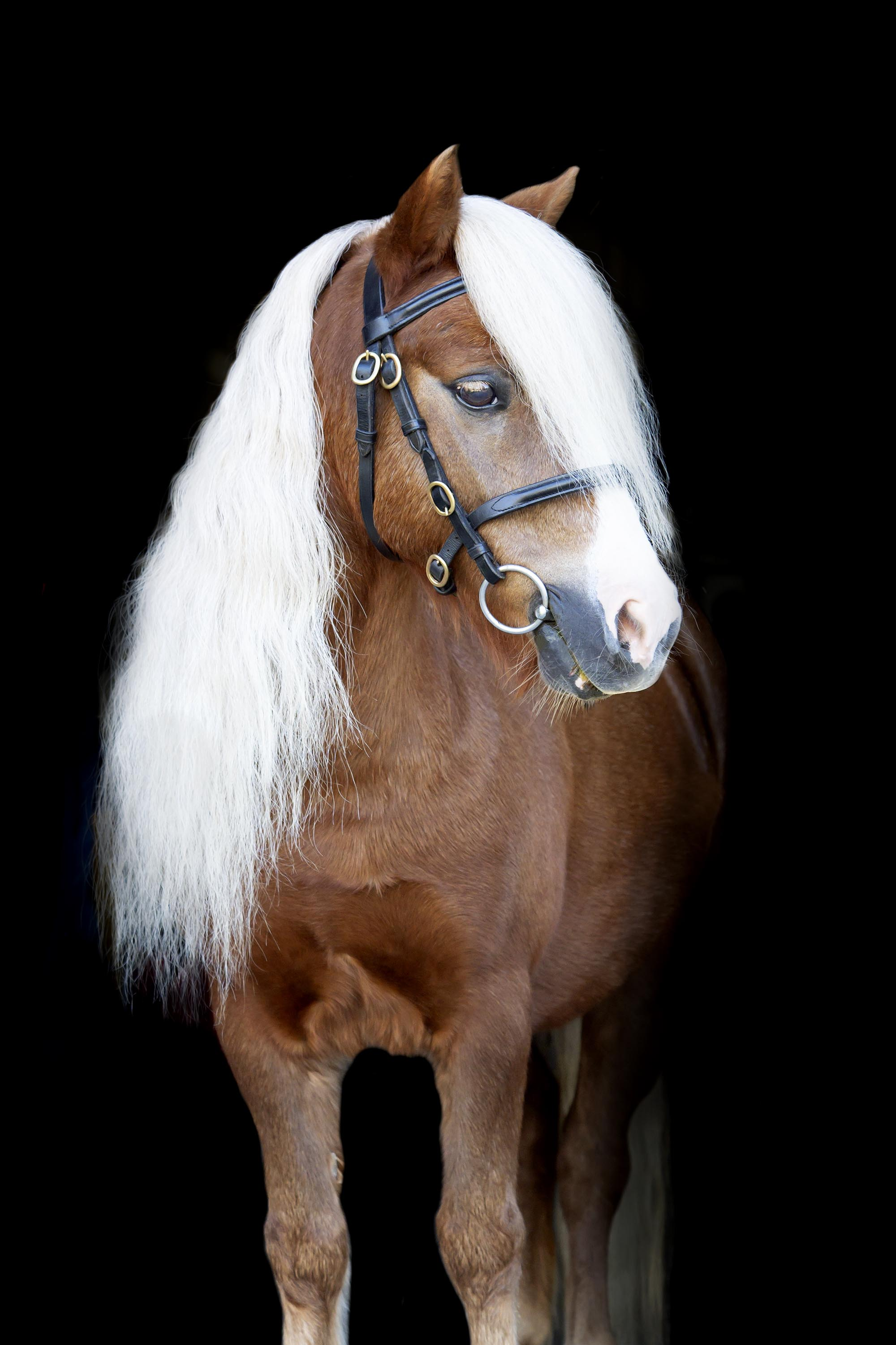 horse-equine-photography-sam-goodwin.jpg