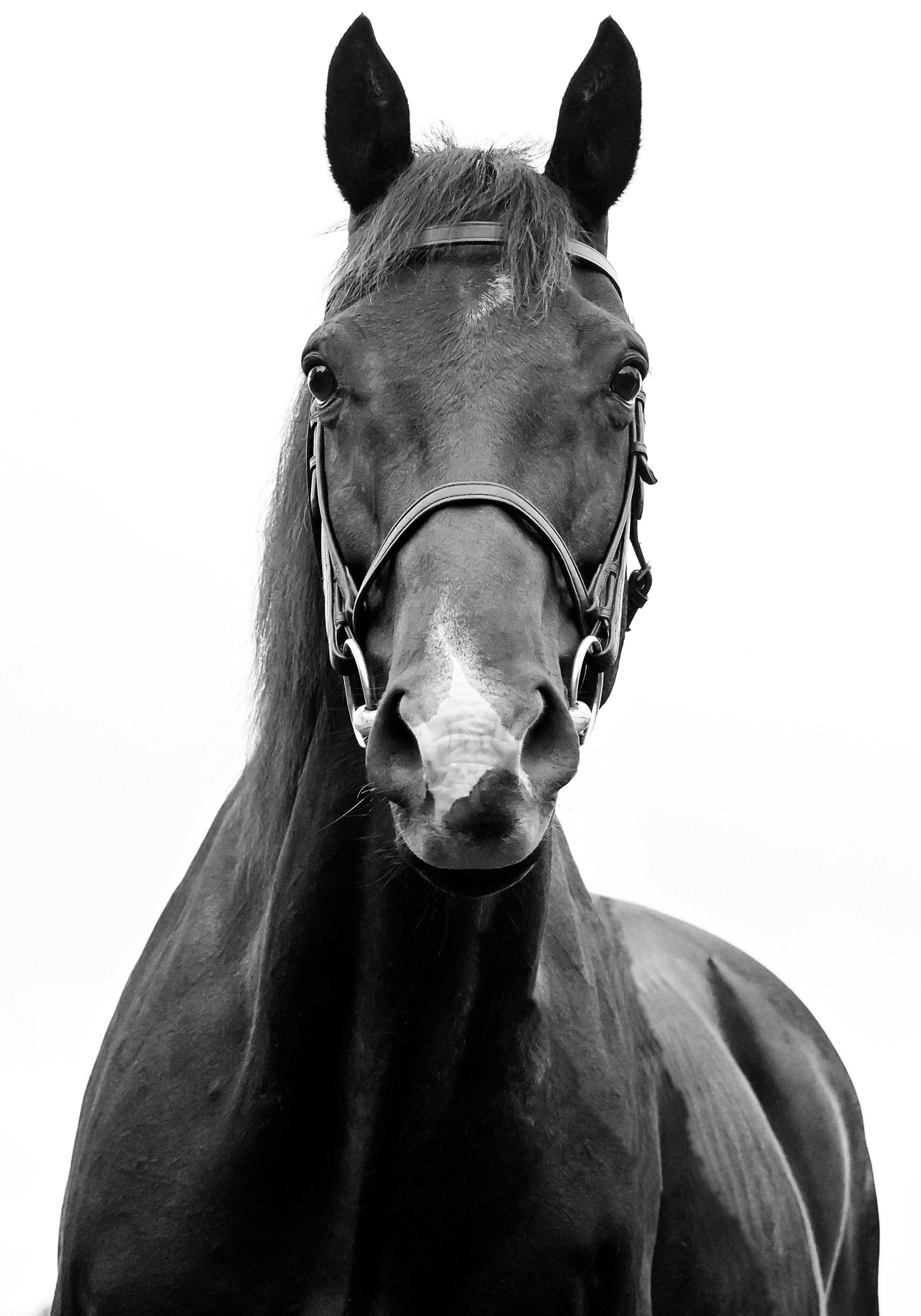 horse-fine-art-portrait.jpg
