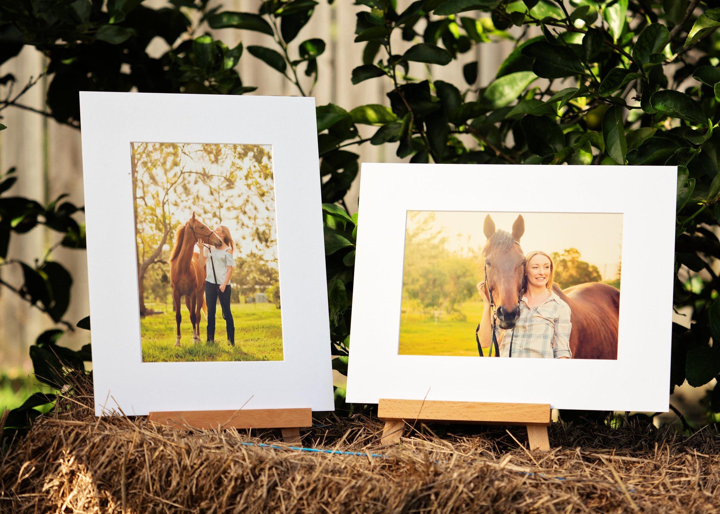 brisbane-horse-photographer