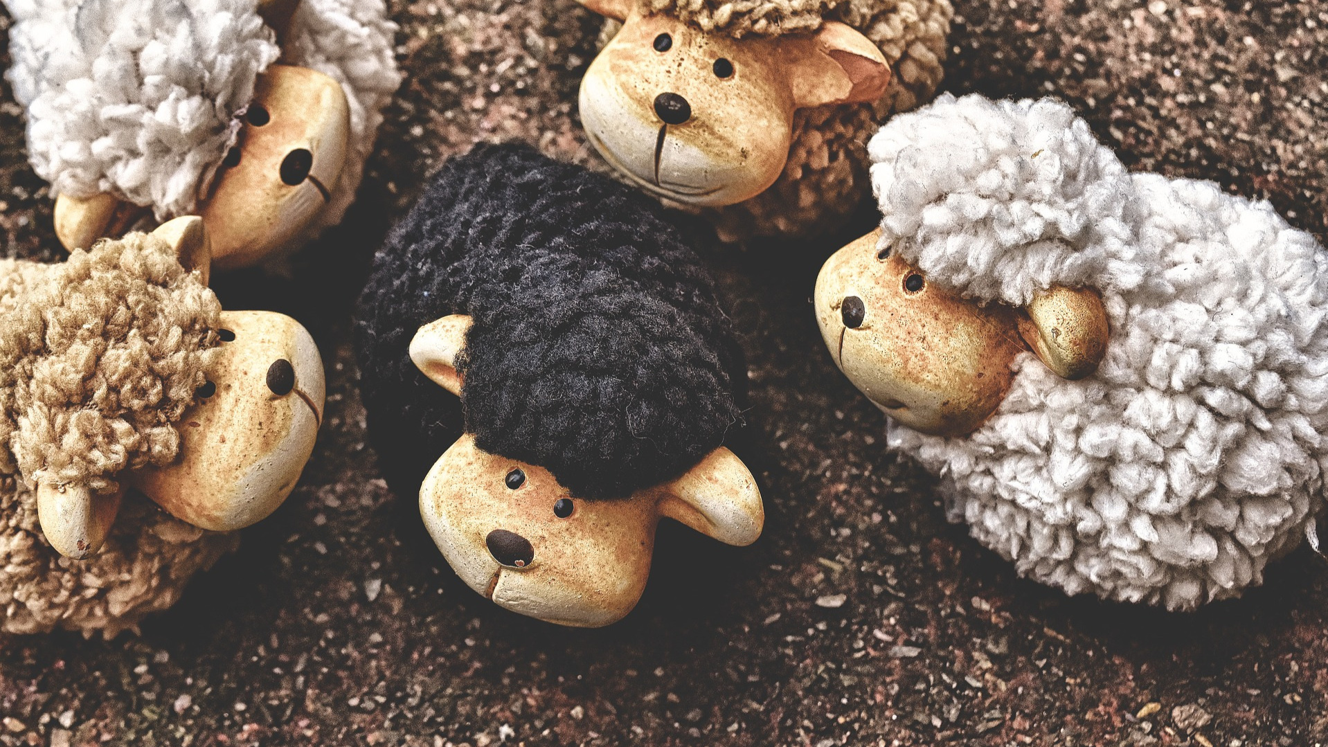 the-black-sheep-3702973_1920.jpg