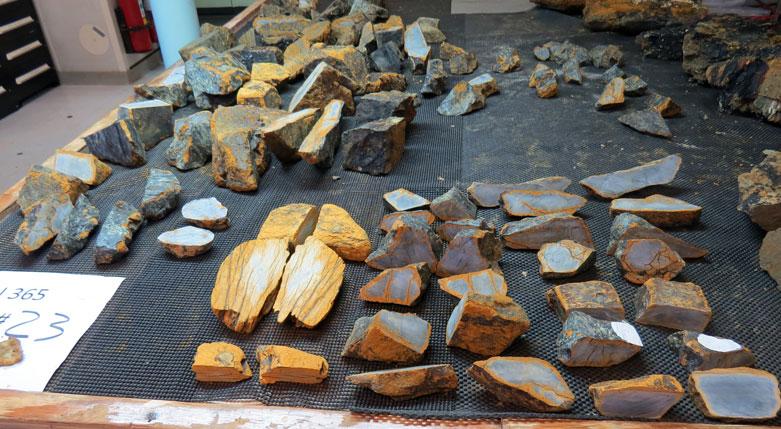 Dredge 23- more and more and more peridotite mylonites