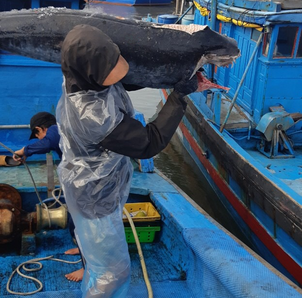 Sustainable swordfish will benefit all stakeholders and support fishing communities