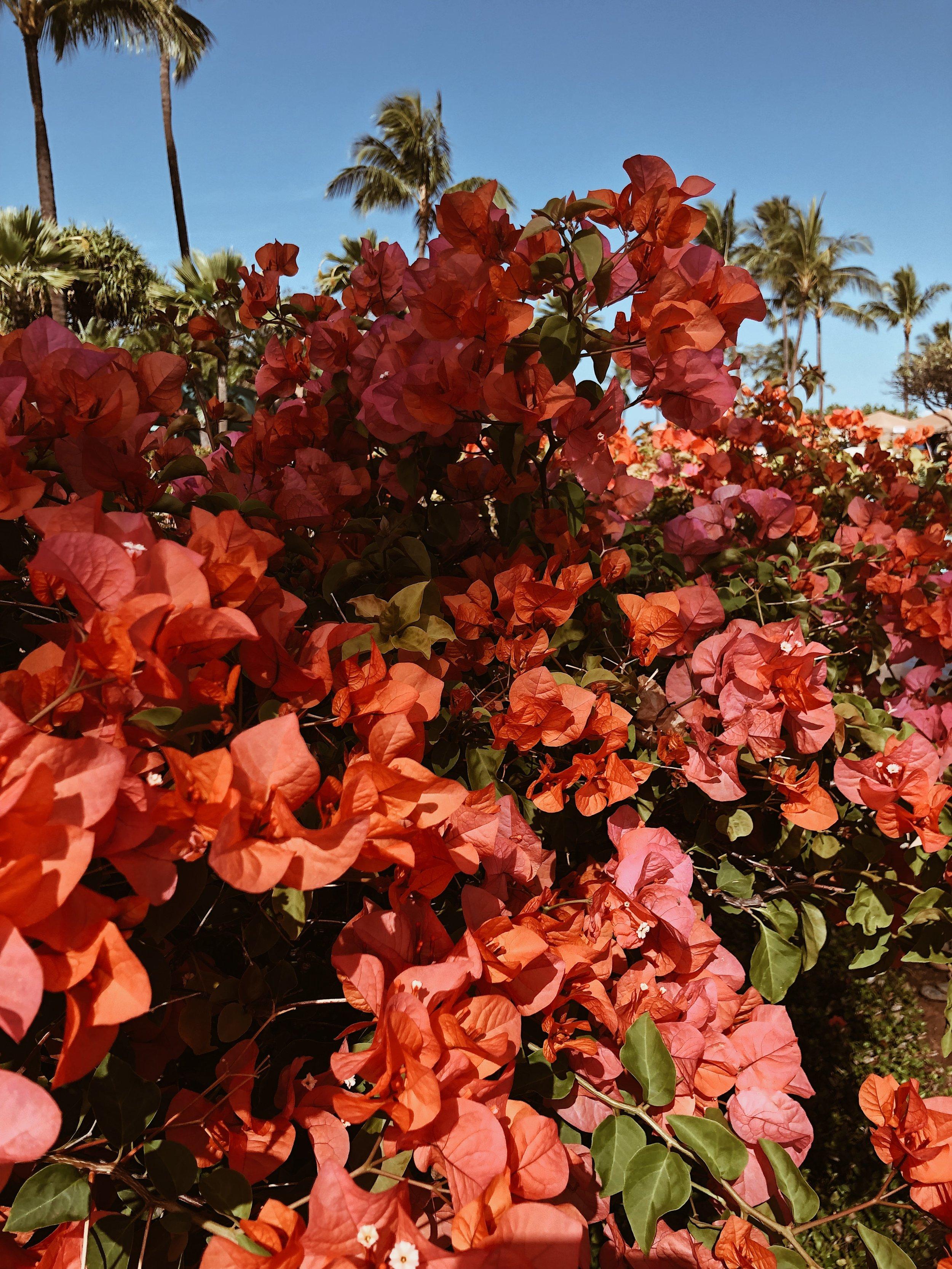 flowers maui hawaii