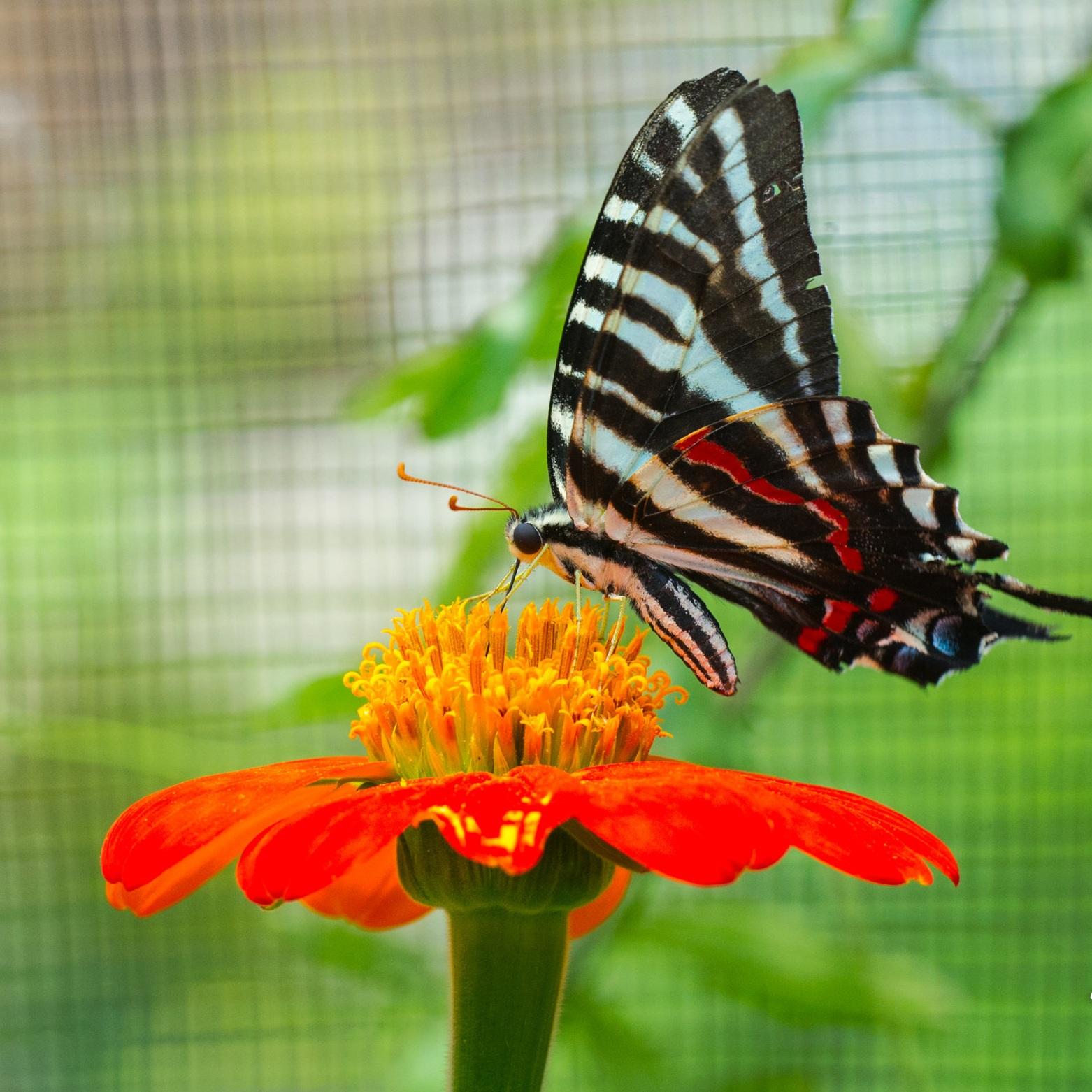 Butterflies+and+Catepillars-5413.jpg