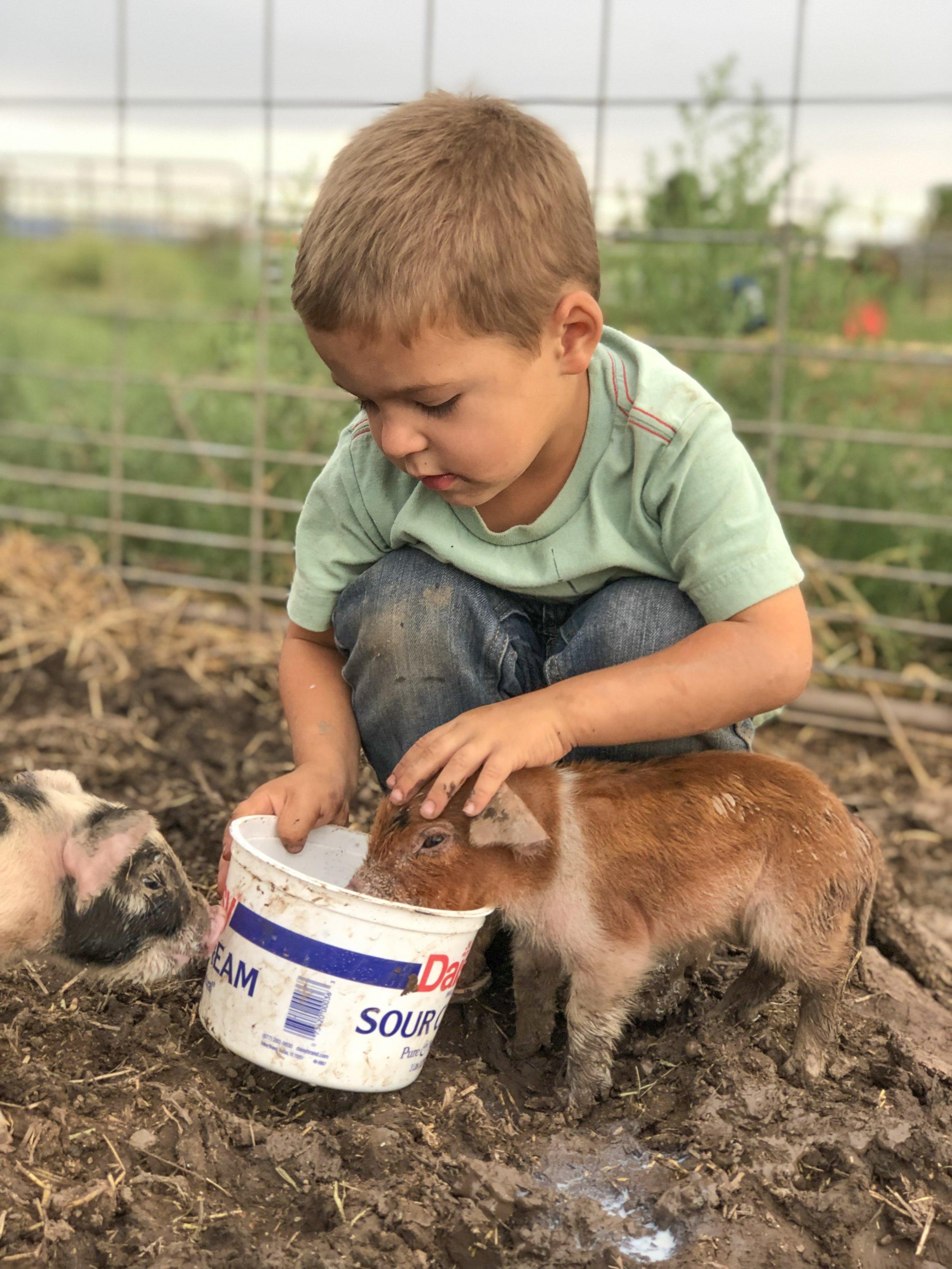 feeding-piglets.JPG