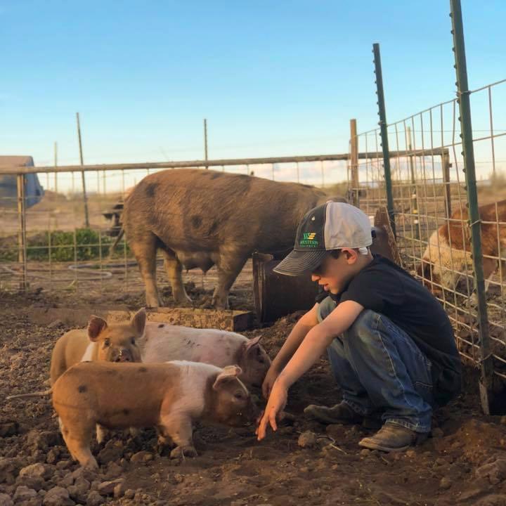 farmboy-with-piglets.jpg