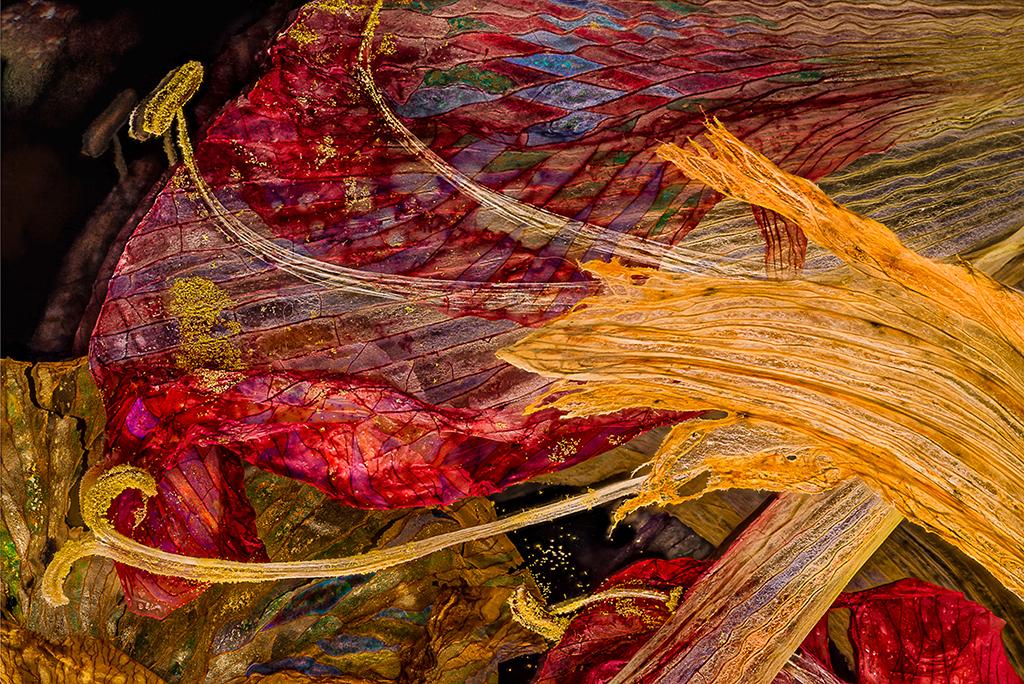 Amaryllis Daylily 02102018
