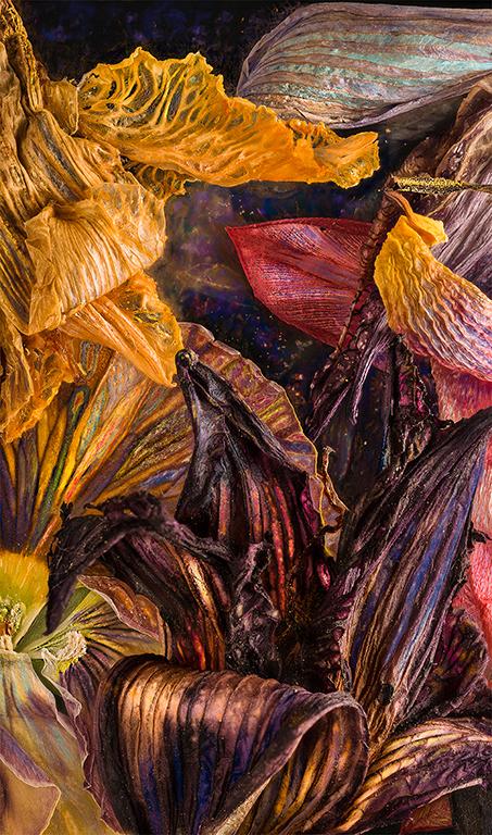 Iris Daylily Pansy Tulip 05032018