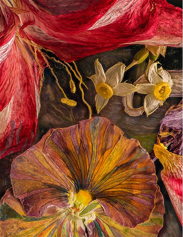 Amaryllis Iris Daffodil 04262018