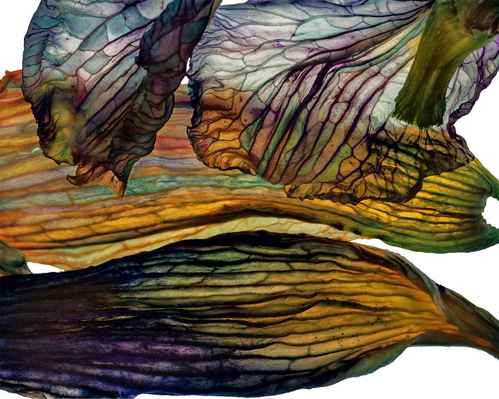 Iris Landscape 07232016