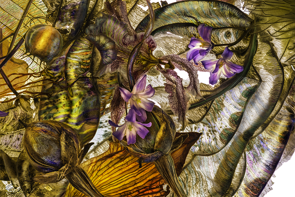 Nigella Chionodoxa Iris Clematis 03222017