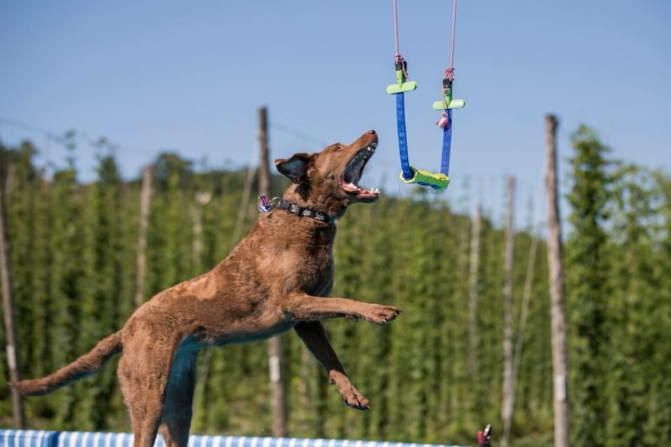 Find out more about west wind diving dogs by clicking HERE. - west wind diving dogs June 7-9July 5-9July 26-28Aug 16-18Sep 6-8
