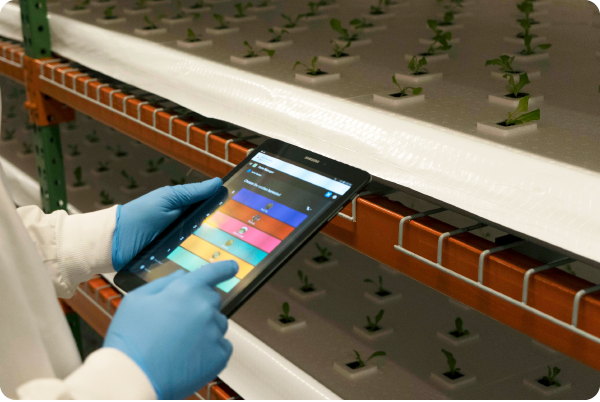 Dynamic Systems - Technology is integrated into all levels of our system. The Crop One Farm Manager allows us to create superior plant quality without pesticide intervention. Instead, we control plant performance using our digital and mechanical control systems—particularly with regard to taste, texture, and cleanliness. The result is leaves with a fraction of the pathogenic load compared to conventional agriculture.See the life cycle of a Crop One plant →