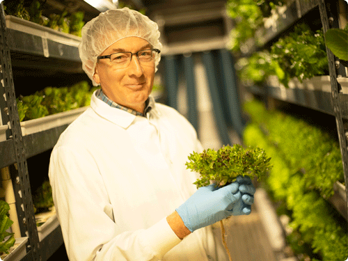 Our farmers are plant biologists - At Crop One, our dedicated team of farmers are led by experienced plant biologists including plant microbiologist Dr. Deane Falcone. Supported by digital controls, our teams monitor the plants growth conditions, collecting data and testing samples to improve our yield and our knowledge of the plant growth cycle.