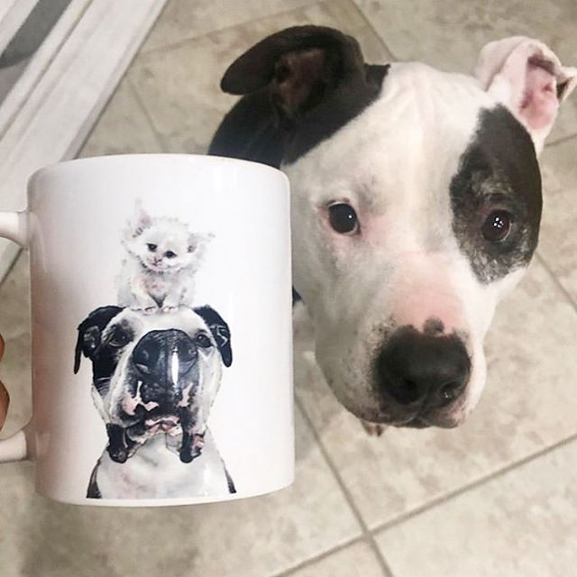If one sweet pibble wasn't enough, here's TWO sweet pibbles looking extra adorable on this Monday morning. .  Want a @hesjustaboyd and Fiona mug of your own? Head on over to the product shop on my website! (Link in bio) They're super cute, ceramic and dishwasher safe! .  Thanks so much for sharing and supporting , @2cresteds_and_a_pibble 💗