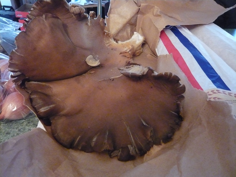 HS_Fungi Dinner_P1110796.jpg