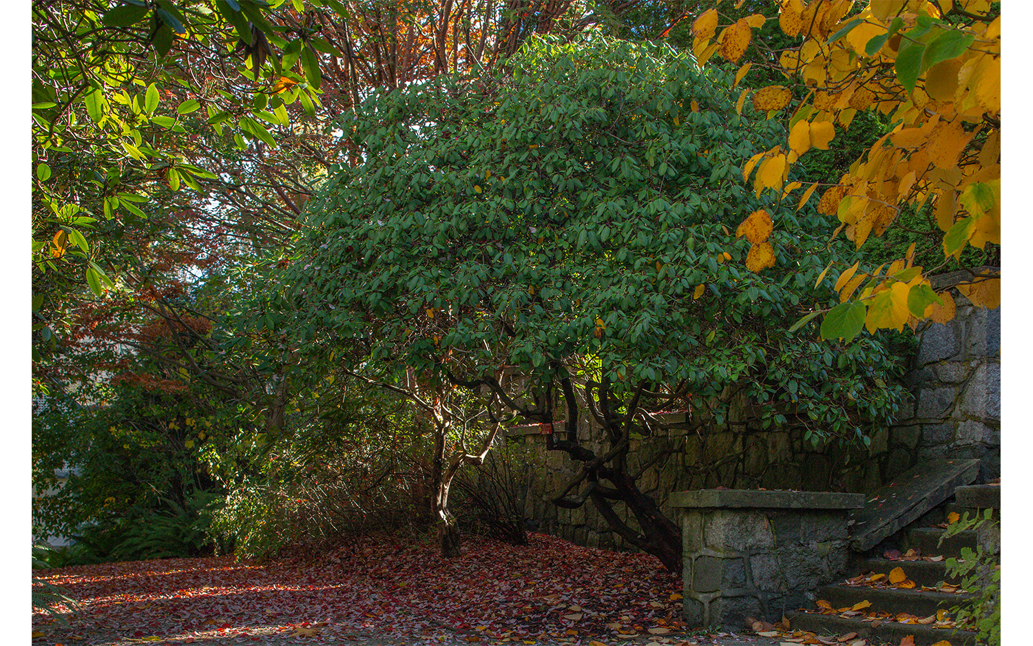 HS-All the trees__09W9117_6420-06.jpg