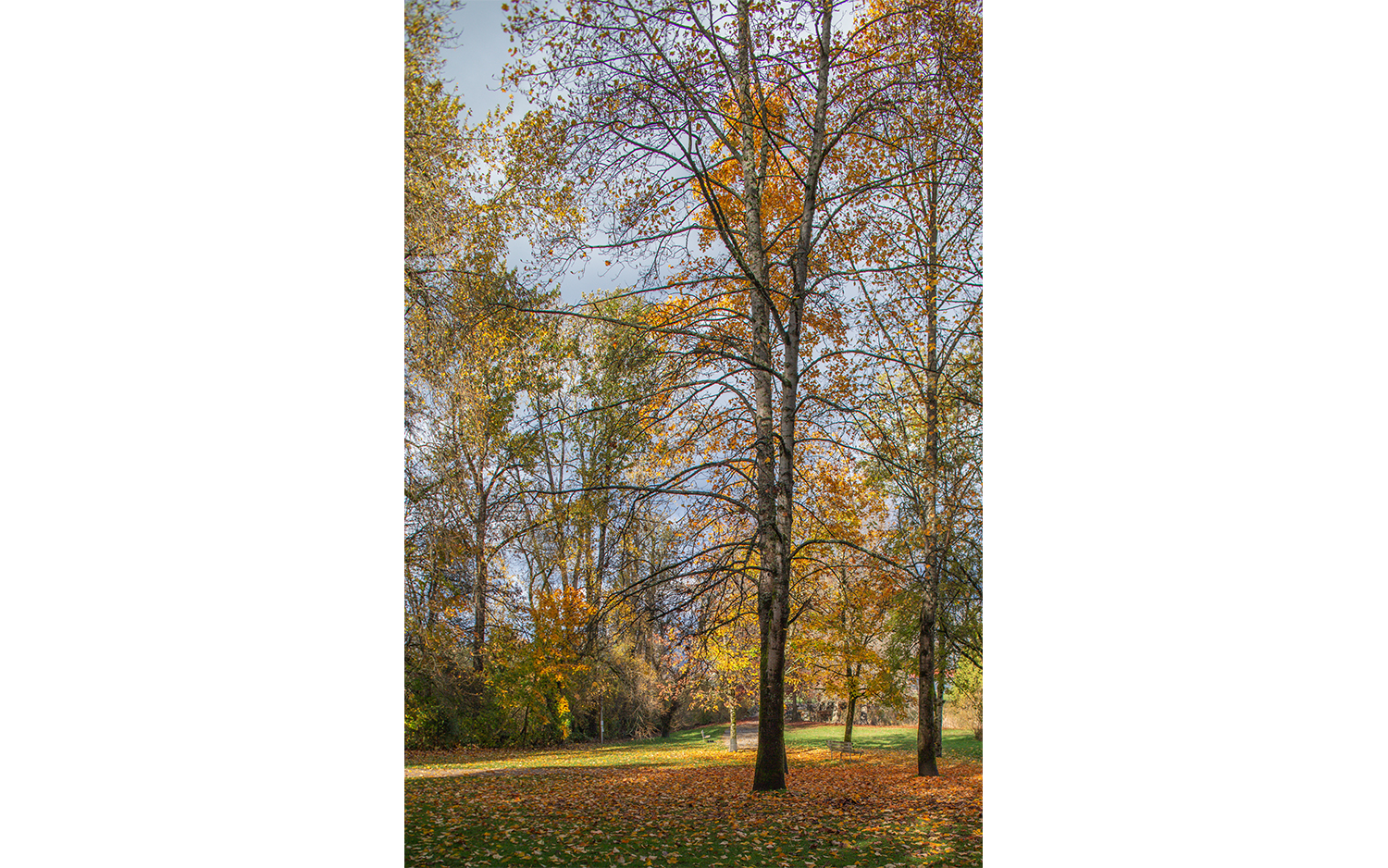 HS-All the trees__09W9178_6402-01.jpg