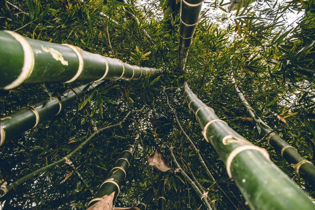 Bamboo Jungle // Ecuador