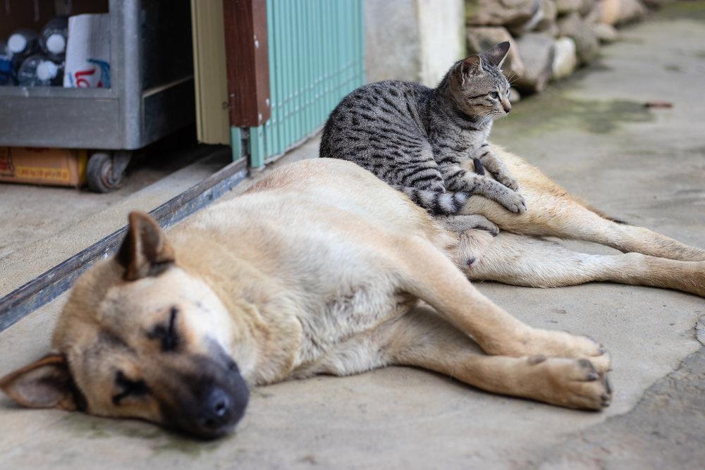 Pet Friendly -