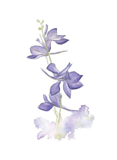 larkspur-minted-low-res.jpg