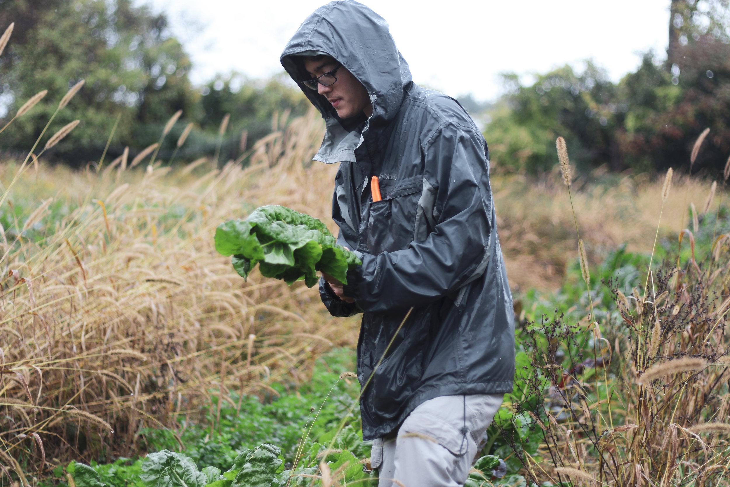 Noah Mark, Here We Are Farm