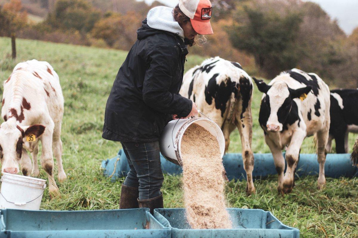 Liz Pickard, Twin Oaks Dairy