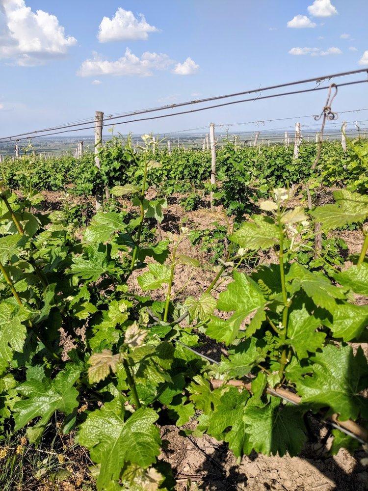 Bulgarian Vineyards