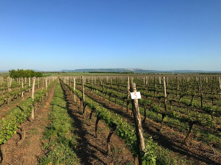 Tsarev Brod Winery
