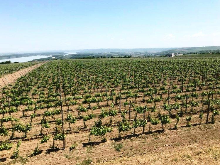 Chateau Burgozone Winery in Oriahovo, Bulgaria