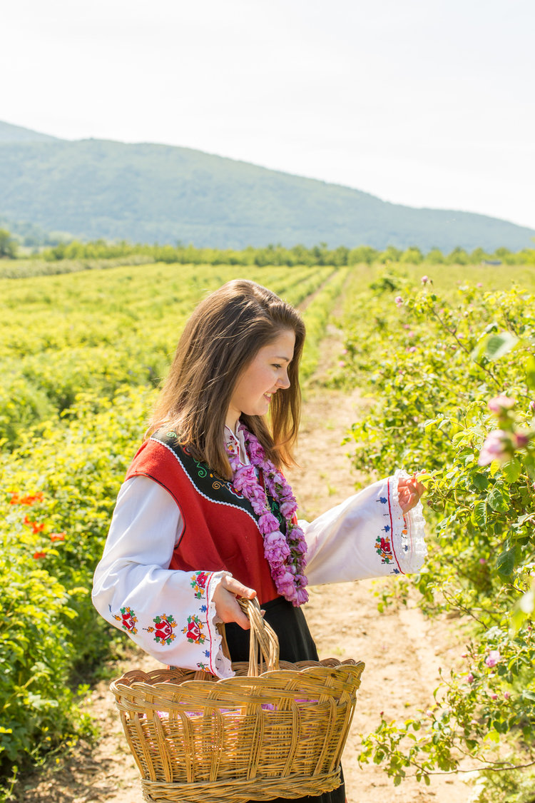 Bulgarian annual Rose picking ritual. Source: iStock by Getty Images