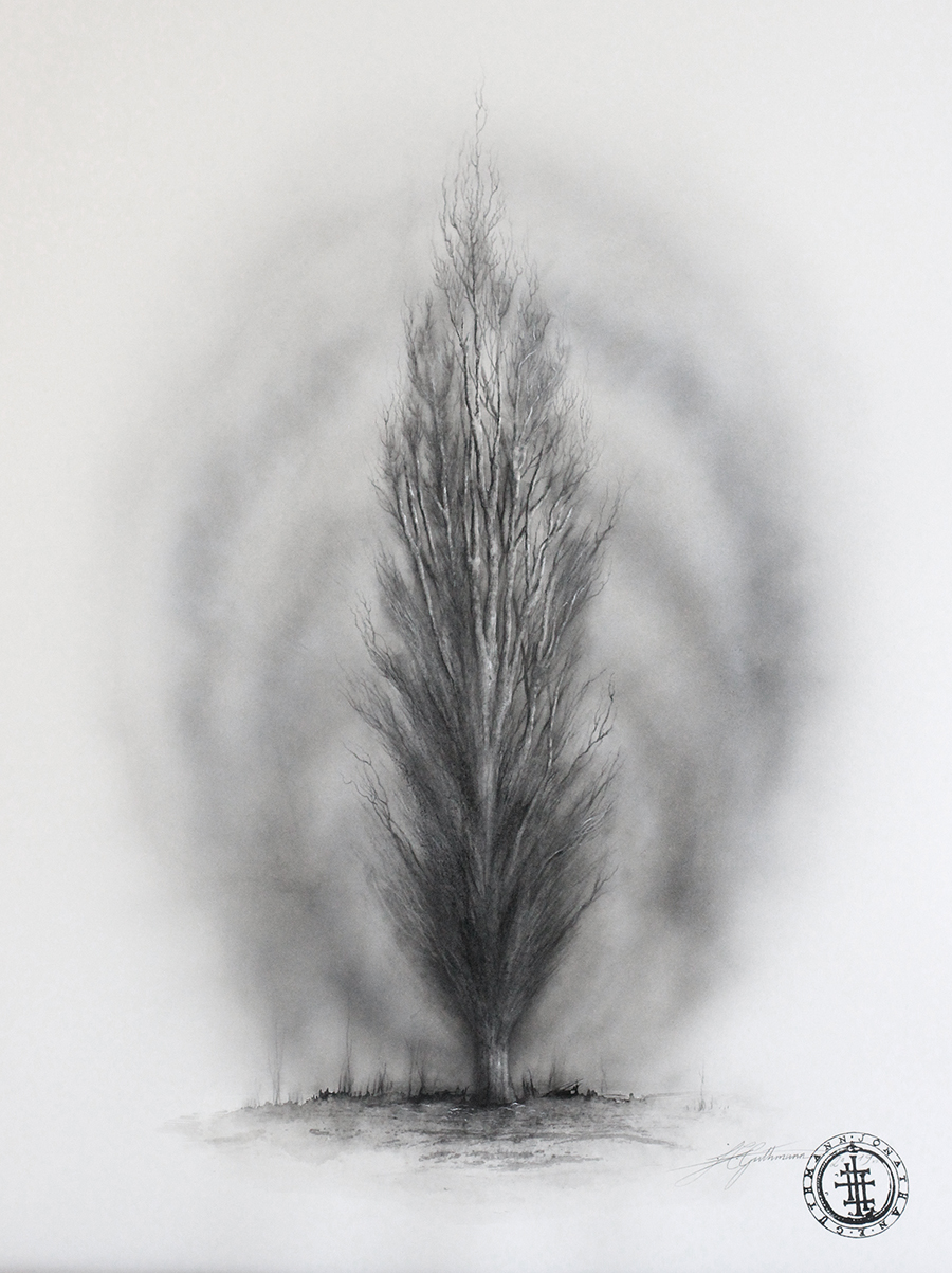 """Tree study 4"" (Poplar in winter/germany)  charcoal, ink and graphite on paper"