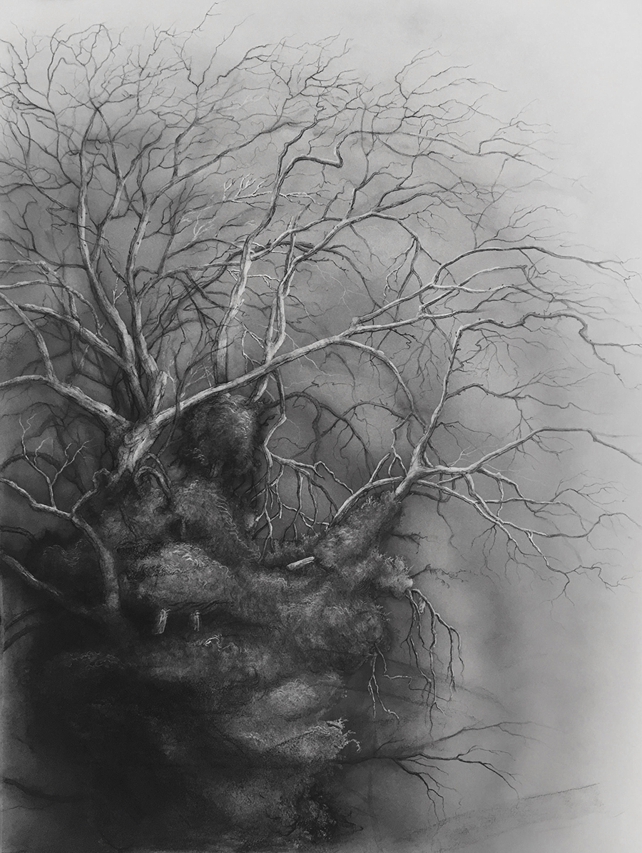 """tree study 2"" (czech republic)  charcoal, ink and graphite on paper"