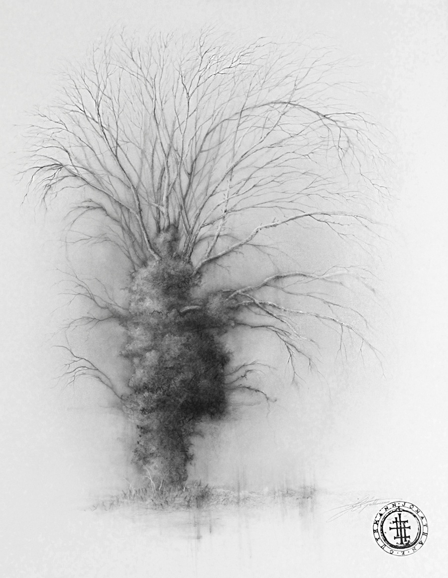 """tree study 3"" (germany)  charcoal, ink and graphite on paper"