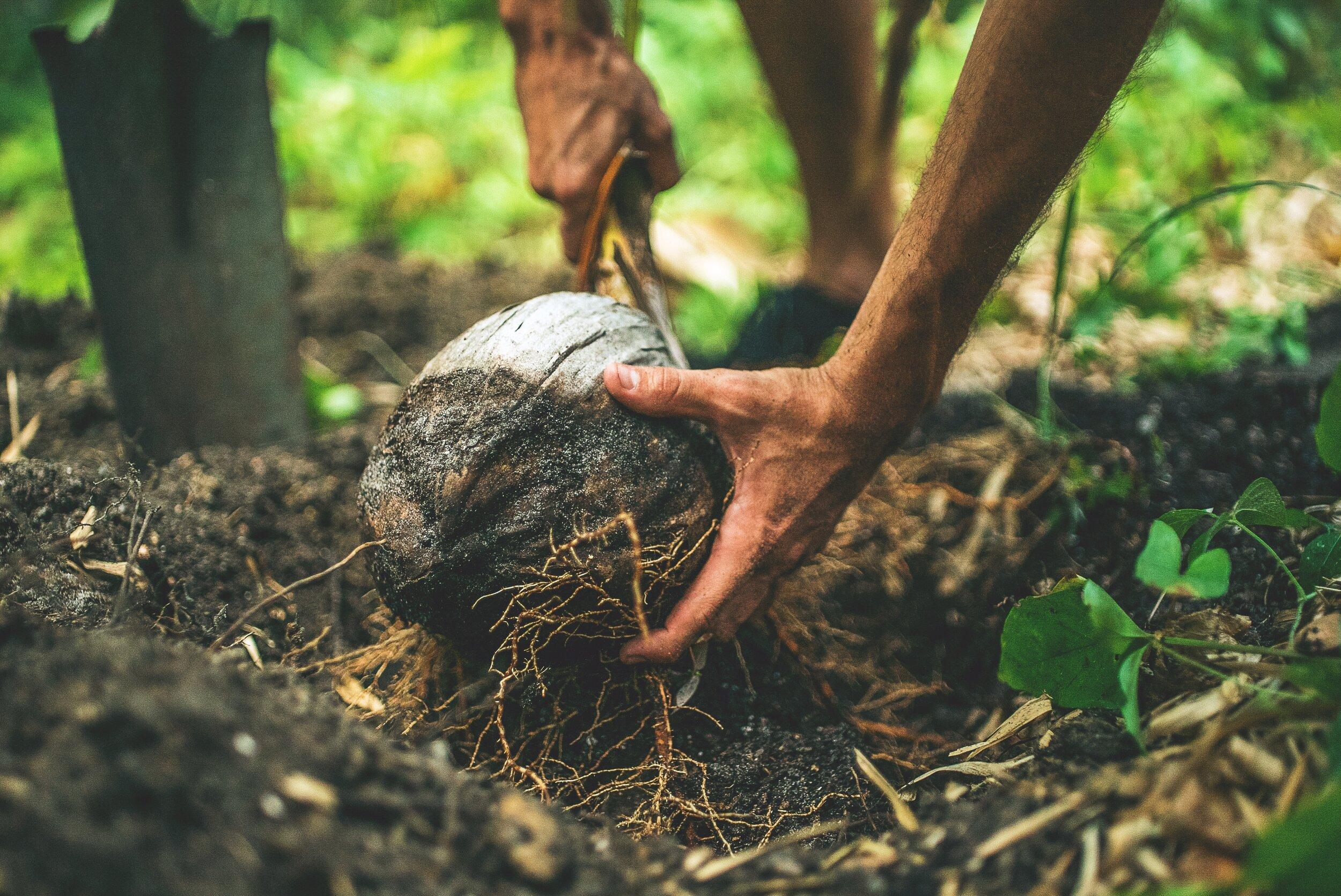 Tip #1 – Introduce coconut oil -