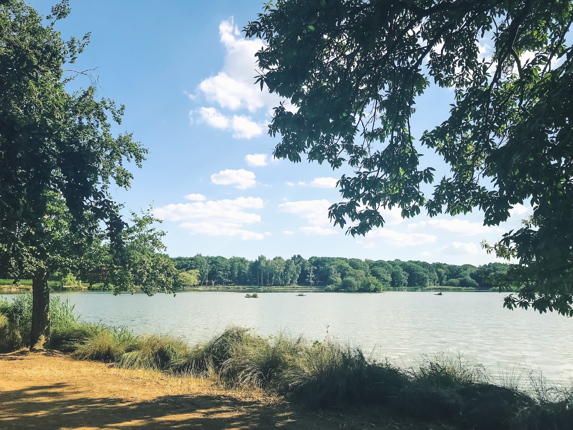 Richmond Park Lake.JPG