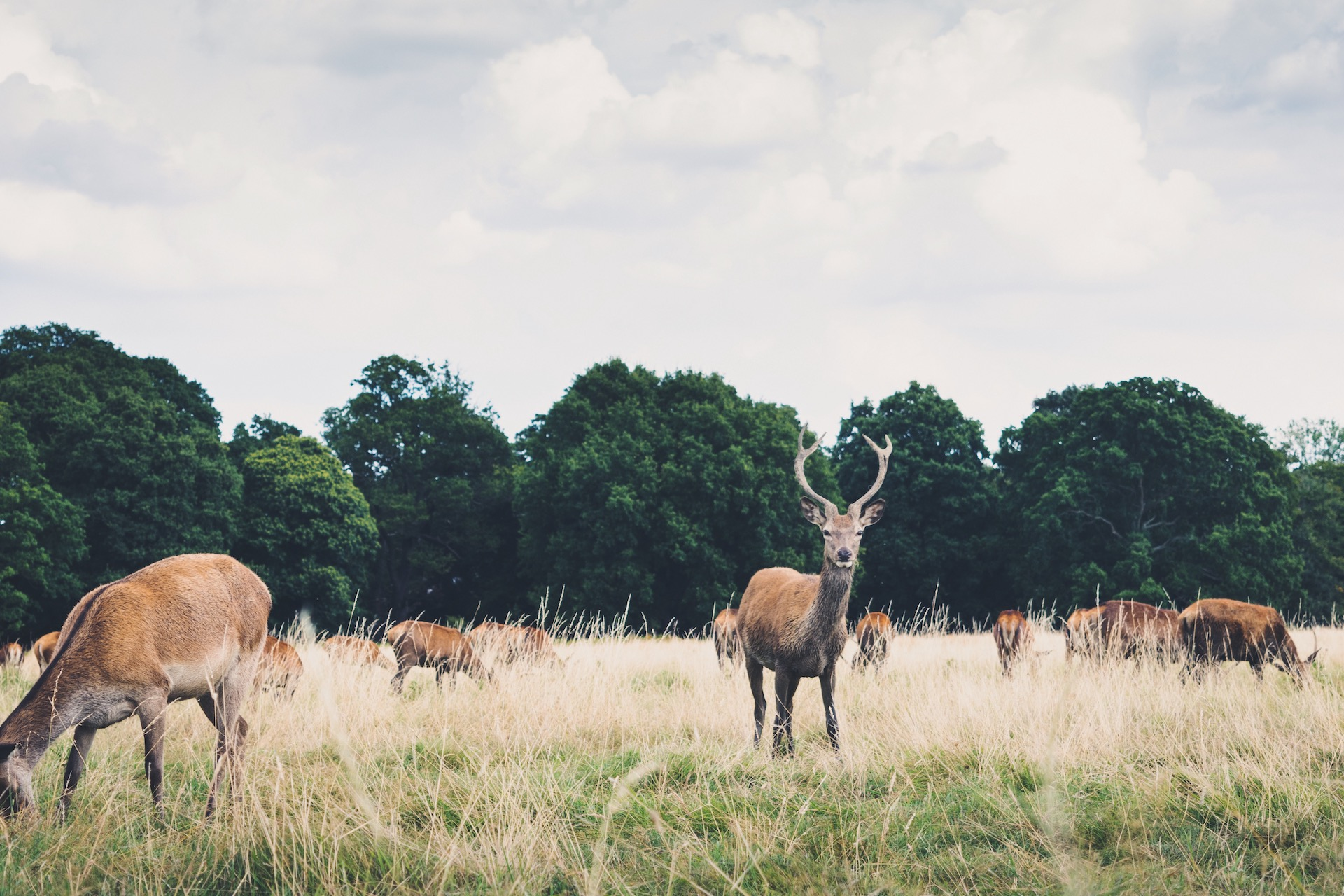 Richmond Park Deer.JPG