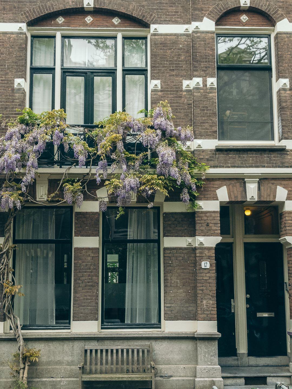 Amsterdam House Wisteria in Bloom.jpg