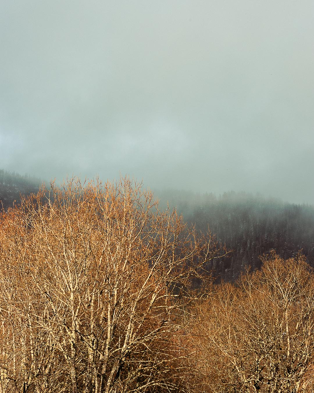 landskap med høstfarger på høsten med lave skyer over fjellende i bakgrunnen. mobilbakgrunn wallart. autumn leaves. fjell.