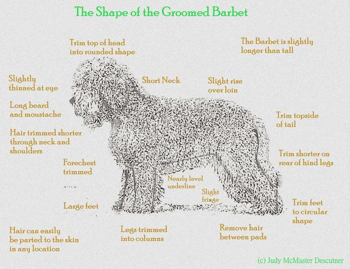 The Groomed Barbet - Details on how to achieve the optimal Barbet look.
