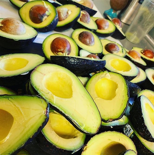 Love the plants 🌱 love the 🌎 we are blessed with so much abundance #plantbased #weloveeverybody #aguacate #avocado #consciouschefs #nosara #surf #eatmoreplants #costarica #yoga #livelife #eathealthy #surfhard #puravida #plantpowered #travelingchefs #earthdayiseveryday