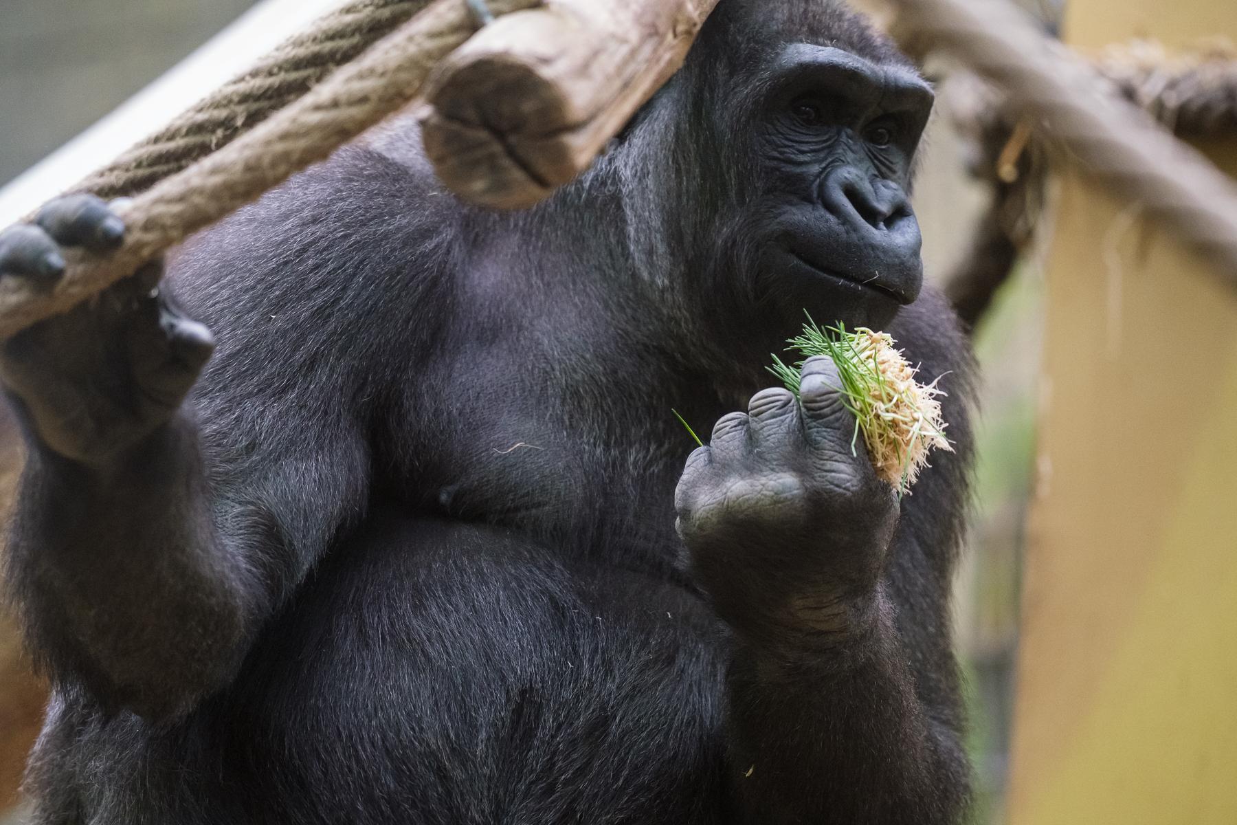 Zürich Zoo - Hans-Peter Breiter - www.zeitbilder.ch