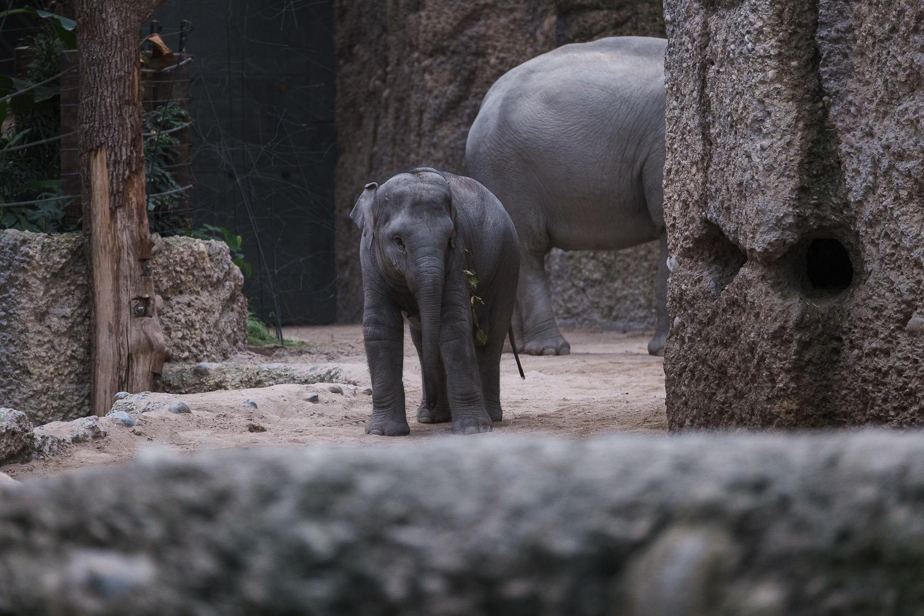 Zoo Zürich - Hans-Peter Breiter -  www.zeitbilder.ch